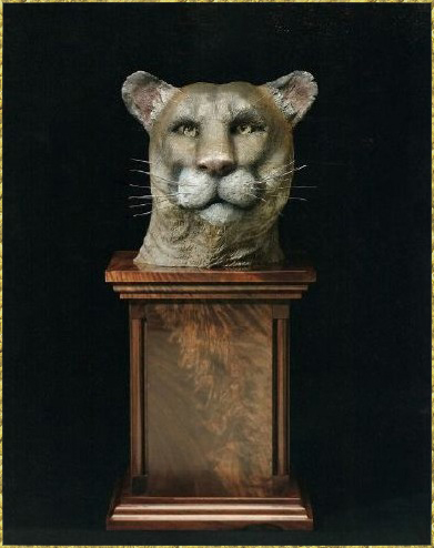 Mountain Lion Bust